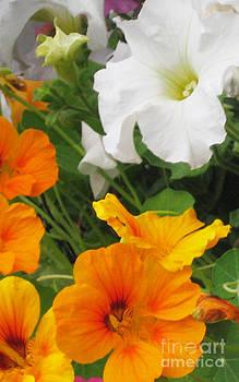 Ellen Miffitt - Petunia and Nasturtium Flower Basket