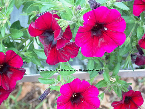 Petunia Glory by Regina McLeroy