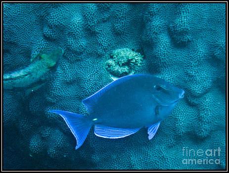 Agus Aldalur - Pez azul
