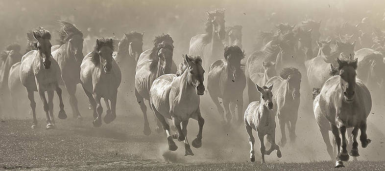 Barbelotta - pferdesport