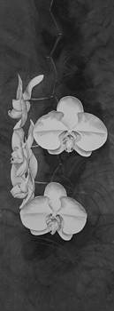 Phalaenopsis Beauty in Contrast by Heather Gallup