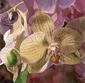 Alfred Ng - Phalaenopsis orchid with pinks