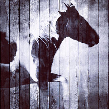 Phantom Stallion by Patricia Januszkiewicz