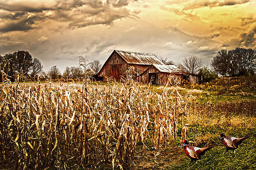 Randall Branham - PHEASANTS HEADING FOR CORN PATCH
