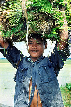 Philippine Lad with Rice Shoots by Gerald MacLennon