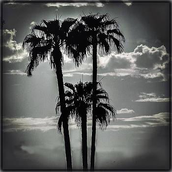 Joe Bledsoe - Phoenix Palms