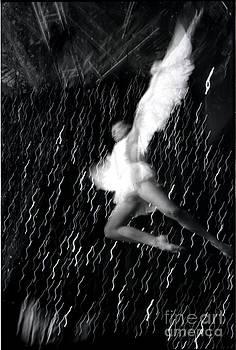 Phoenix rising by Elena Fattakova