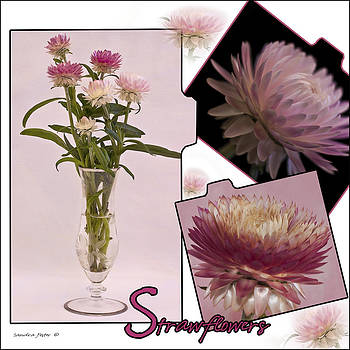 Sandra Foster - Photo Collage Of Strawflowers
