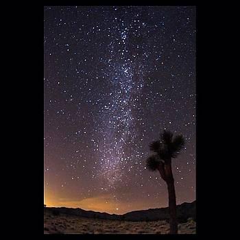 Photo Of Milky Way In Joshua Tree by Mark Jackson