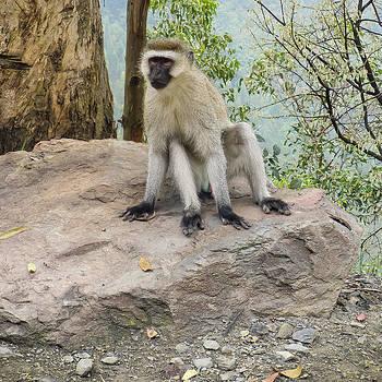 Photogenic Monkey by Paul Weaver