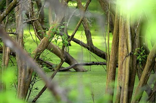 Green Water at Brazos Bend State Park in Texas by Alex King