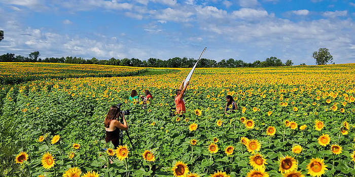 Alan Hutchins - Photographing the Sunflowers