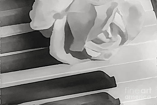 Piano Rose by Catherine Hill