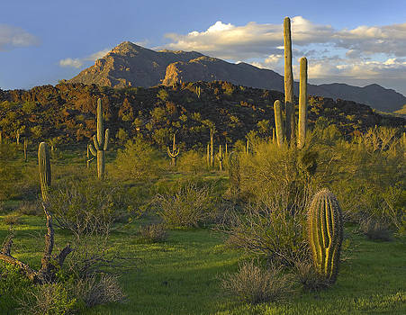 Picacho State Park in Arizona by Tim Fitzharris