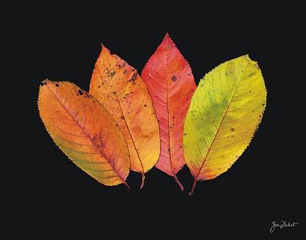 Joe Duket - Pick a Leaf