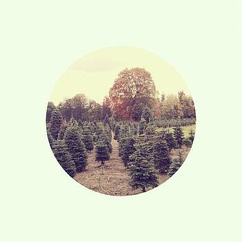 Pick The Perfect Christmas Tree by Rebecca Guss