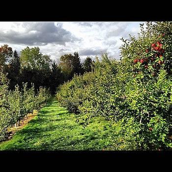 Picki'n Apples #apples #iphone by Corey Sheehan