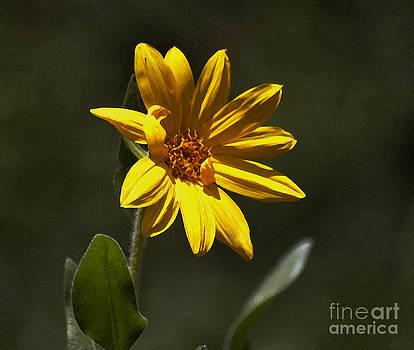 Pickin' Wildflowers  by Juls Adams