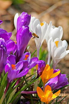 Picking A Spring Flower by Jay Nodianos