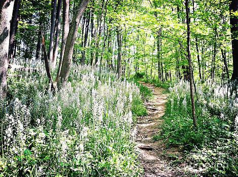 Rachel Barrett - Picking Wildflowers