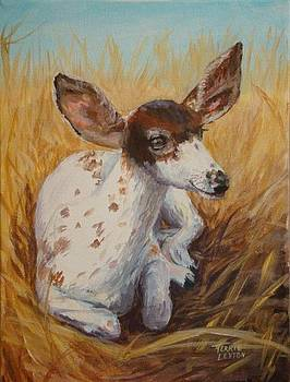Pie-bald Fawn by Terrie Leyton