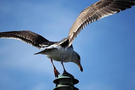 Pier Bird by Mari Cody