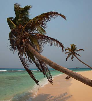 Susan Rovira - Pigeon Cays Palm Trees