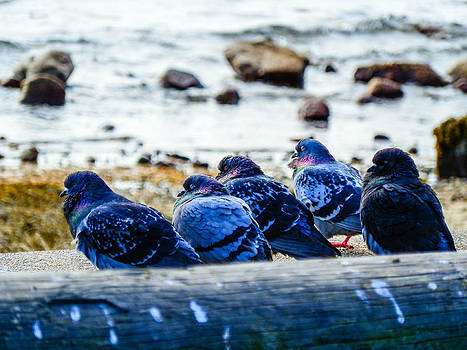 Pigeon Hangout by Heather Sylvia