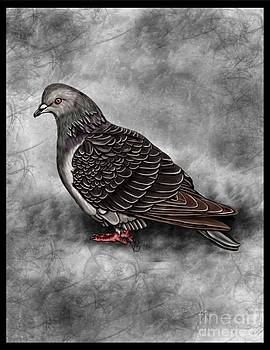 Pigeon by Karen Sheltrown