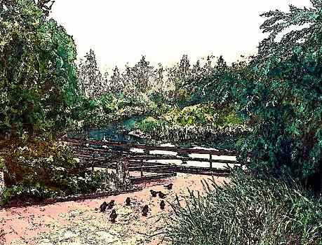 Pigeons at Sechelt Marsh by Stanley  Funk