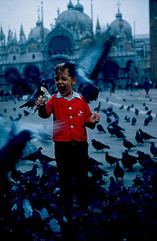 Pigeons Galore 1961 by Cumberland Warden