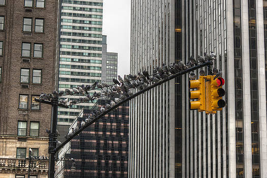 Pigeons in New York by Pier Giorgio Mariani
