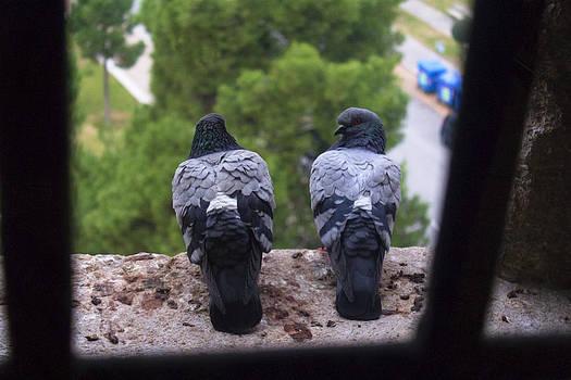 Pigeons love by Martin Hristov