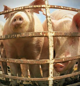 Pigs by Lonnie Paulson