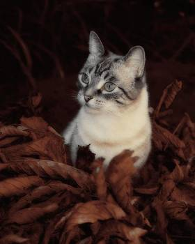 Gothicrow Images - Rustic Pile Of Leaves And Cat
