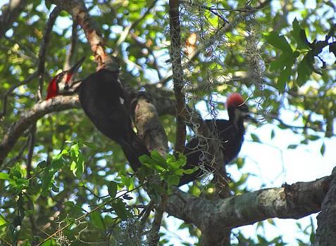 Pileated Woodpecker Male and Female by Fineartist Ellen