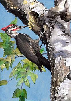 Pileated Woodpecker by Steve Hamlin