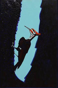 Piliated Woodpecker by Anguspaul Reynolds