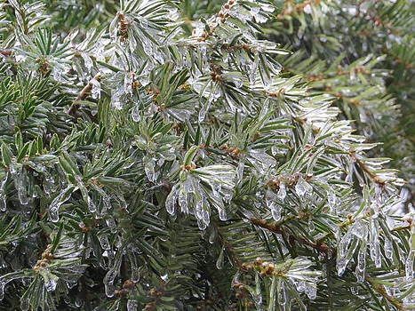 Pine And Ice by Elisabeth Ann