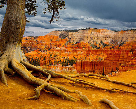 Pine at Bryce by Jim Snyder