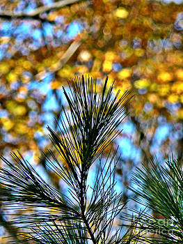 Pine Bouquet 1 by Chris Sotiriadis
