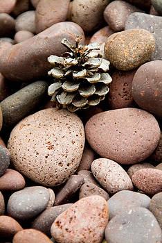 Devinder Sangha - Pine Cone
