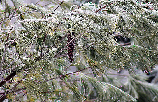Pine cone on an Icy winter day by Danielle Allard