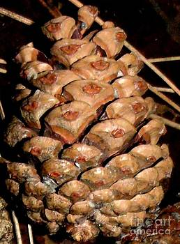Gail Matthews - Pine Cone or Pine Apple