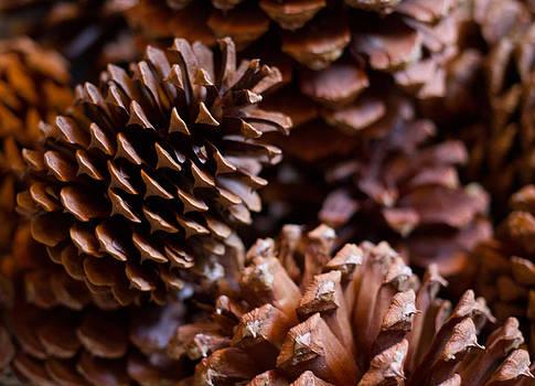 Pine Cones by Lauren Goia
