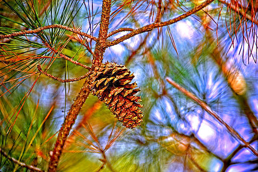 Pine Cones  by Marilyn Holkham