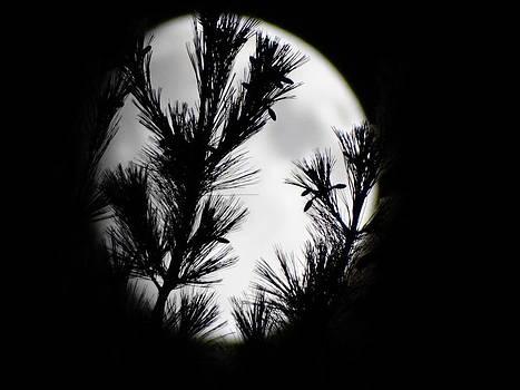 Pine Moon by Mary Vinagro