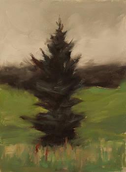 Pine study by Thorgrimur Andri Einarsson