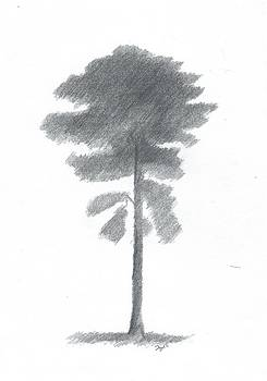 Pine Tree Drawing Number Four by Alan Daysh