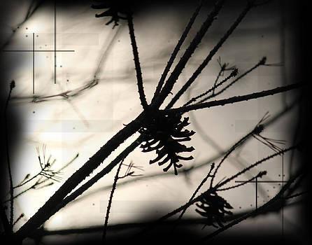 Pine Tree Shadows by Andrew Sliwinski